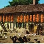 Après la récolte, la maïs était mis à sécher en grappes nommées « raisins » sous les avant-toits des fermes
