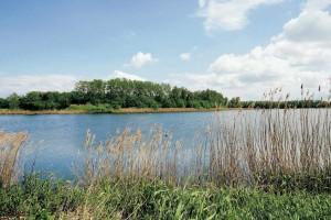 La Dombes abrite une végétation d'une diversité exceptionnelle