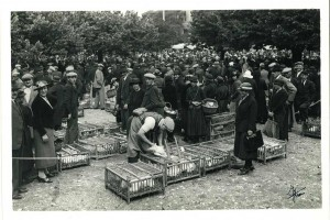Le marché de la volaille à Bourg-en-Bresse